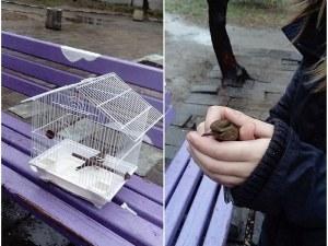 13-годишната Ирина от Асеновград е местният д-р Дулитъл, спасява птици, храни мравки СНИМКИ