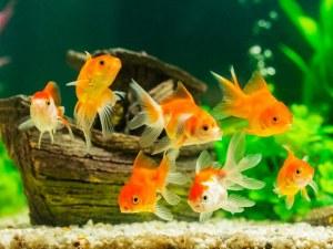 Рибите разпознават себе си, когато се видят в огледалото
