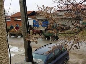 Роми впрегнаха каруци с незаконно отсечени дървета в пловдивско село ВИДЕО