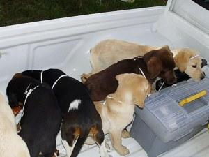 Кучета за трафик на наркотици използвал ветеринар
