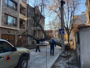 Властите вдигат рамене: Къде е обезщетението на хората, върху чиято къща в Пловдив падна дърво? СНИМКИ