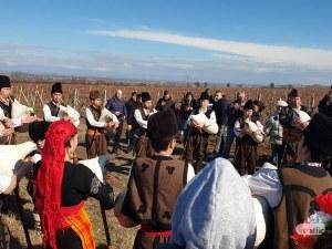 Гайди, хора и руйно вино - зарязаха лозята в Брестовица СНИМКИ
