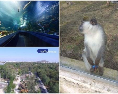 Последно: Зоопаркът в Пловдив без тигър, но мислят за огромен аквариум ВИДЕО
