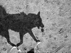 Масов мор на кучета в Кюстендилско! 16 отровени за седмица