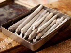 Спипаха пазарджиклия с голямо количество марихуана