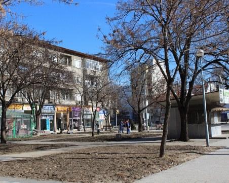 Засадиха над 1400 храста и 50 дървета в центъра на Пловдив СНИМКИ