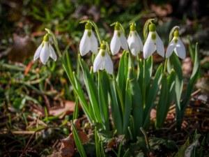 И ни замириса на пролет! Слънчев понеделник ни очаква, до 15°С