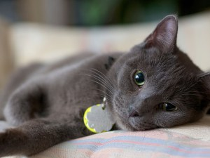Котките прихващат емоциите на стопаните си
