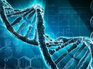 Учени откриха как генетиката влияе на затлъстяването