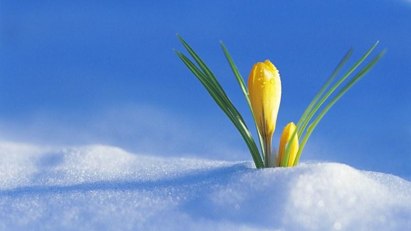 Пролетта – до петък. После заоблачаване, застудяване и… сняг
