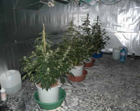 Модерна оранжерия за марихуана разкрита в Разград СНИМКИ