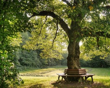 Заобиколените от зелени площи деца, растат с по-добро психично здраве