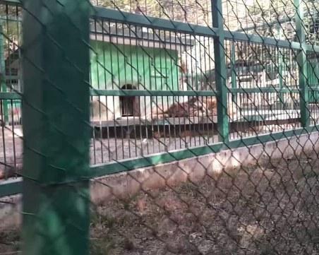 49-годишен мъж се обеси в зоопарка в Разград