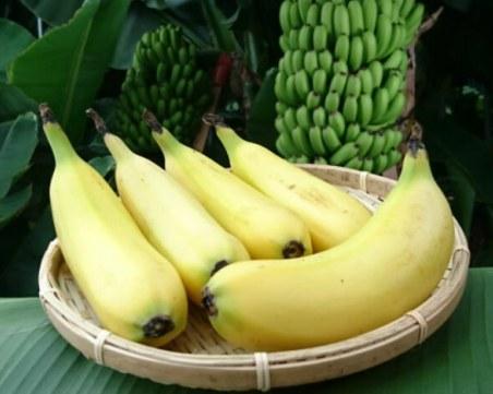 Банан с кора, която се яде, направиха японци СНИМКИ