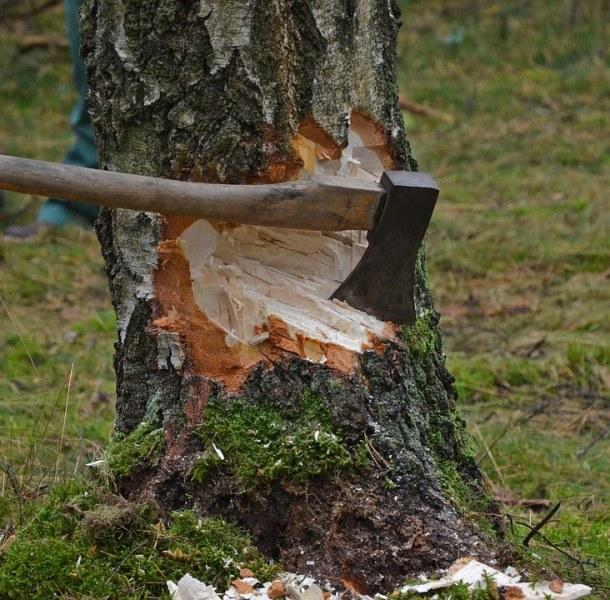 Сеч на 30-годишни дървета в Сливен, жителите плашат с жива верига