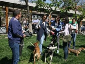 Бял бус снове и изхвърля бездомни кучета в София, карат ги и от Монтана