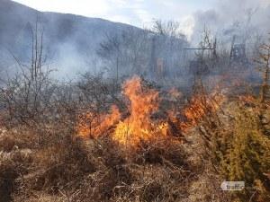Пожар лумна до Долни Пасарел, захапа гората, пълзи към къщите СНИМКИ и ВИДЕО