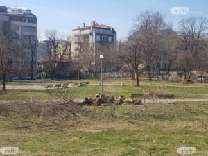 Пловдивчани се вдигат на протест заради строеж в парк