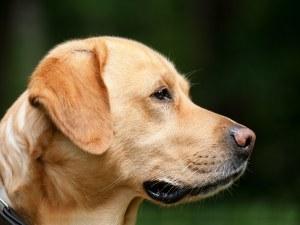Софиянец ослепи куче от бой,  получи 7 месеца условно