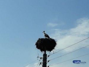 Първите щъркели долетяха в Пловдивско СНИМКИ