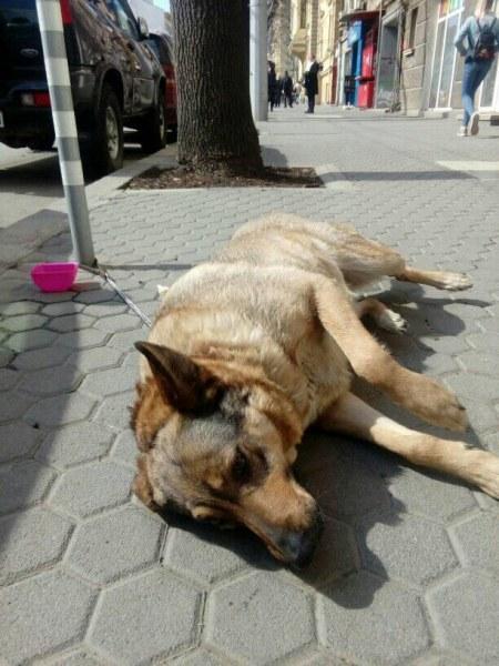 Развръзката: Прибраха завързаното куче на бул.
