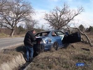 Гипс и домашно лечение за забилите се в дърво край Карлово ВИДЕО
