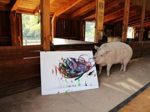 Свиня гони по слава Пикасо, вади по $ 4 000 от картина ВИДЕО