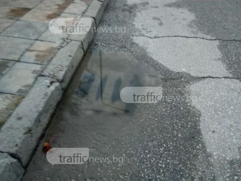 Започва обработка срещу гризачи в Пловдив! Не паркирайте върху шахтите