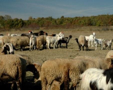 81-годишен преби съседка в Кърджалийско, добитъкът му влезнал в нивата й