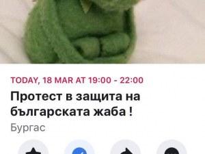 Може да са крастави, ама са наши! Протест брани българските жаби