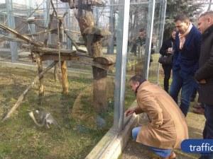 Документация бави довършването на зоопарка в Пловдив, все пак го отварят през лятото ВИДЕО