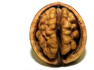 Как да подобрим паметта и функциите на мозъка си?