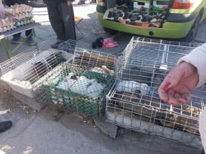 Продължават проверките на пазара до КАТ-Пловдив! Хванаха двама нарушители