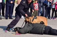Полицаи на четири лапи влизат в зрелищна акция в Пловдив
