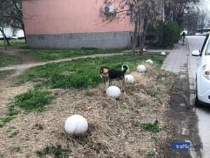 Домашно куче се скита само из Смирненски! Познавате ли собствениците му?