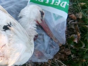 Убиха млад щъркел с въздушна пушка в Благоевградско