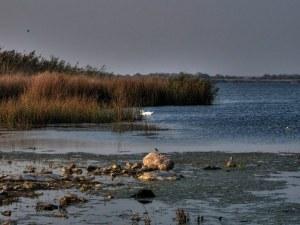 Екоминистърът: Шабленското езеро е затлачено с тиня, рибата намалява!