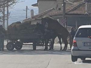 Кон и магарица решиха да си направят катър на пловдивска улица, шофьори стоят и ги чакат СНИМКИ