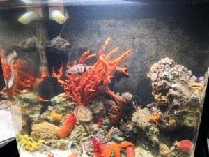 Най-отровните риби дебнат в Природонаучния в Пловдив ВИДЕО и СНИМКИ