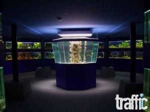 Откриват нова зала с акули и мурени в Природонаучния музей в Пловдив