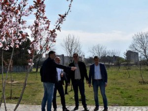 Управлява ли кампанийно Пловдив зелените си имоти, или кога властите