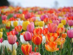 Пролетта е тук! Радваме се на слънце през уикенда