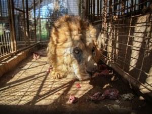Мащабна спасителна мисия в Ивицата Газа! Спасяват животни от зоопарк