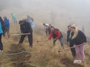 Доброволци създадоха борова гора край Пловдив