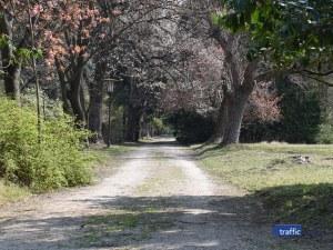 С цвят на магнолия и аромат на вишна: Райската градина на 20 км. от Пловдив