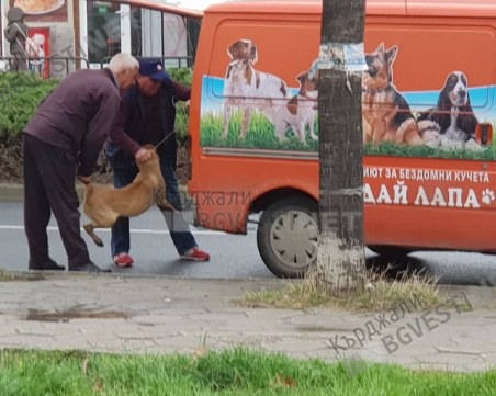 Нечовешко отношение към кучетата в кърджалийски приют