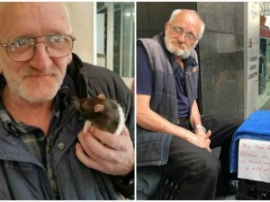 Откраднаха плъх от бездомник в Сидни, полицията е на крак
