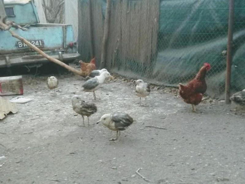 Гларуси с подрязани криле в кокошарник на ада! Смрад на пъпа на Варна