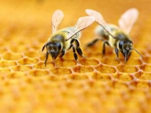 Отровиха пчели от над 400 кошера край Балчик. Кой е виновен?