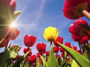 Цветница идва, задава се Великден. С какво време ще ги посрещнем?
